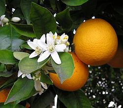 orangedouce.jpg