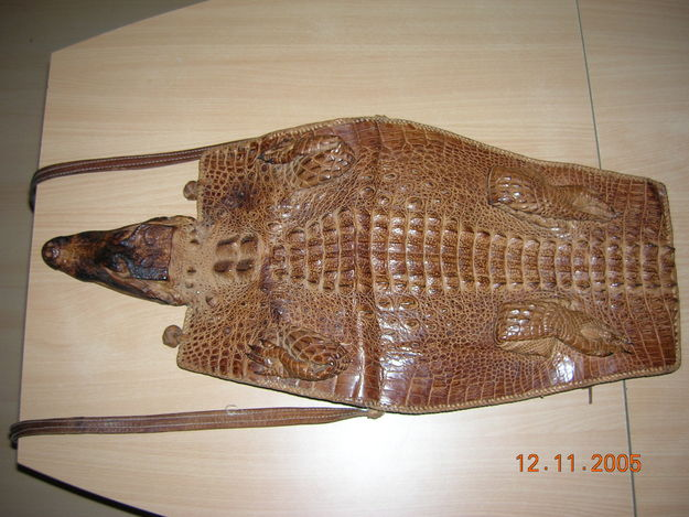 crocodile5.jpg
