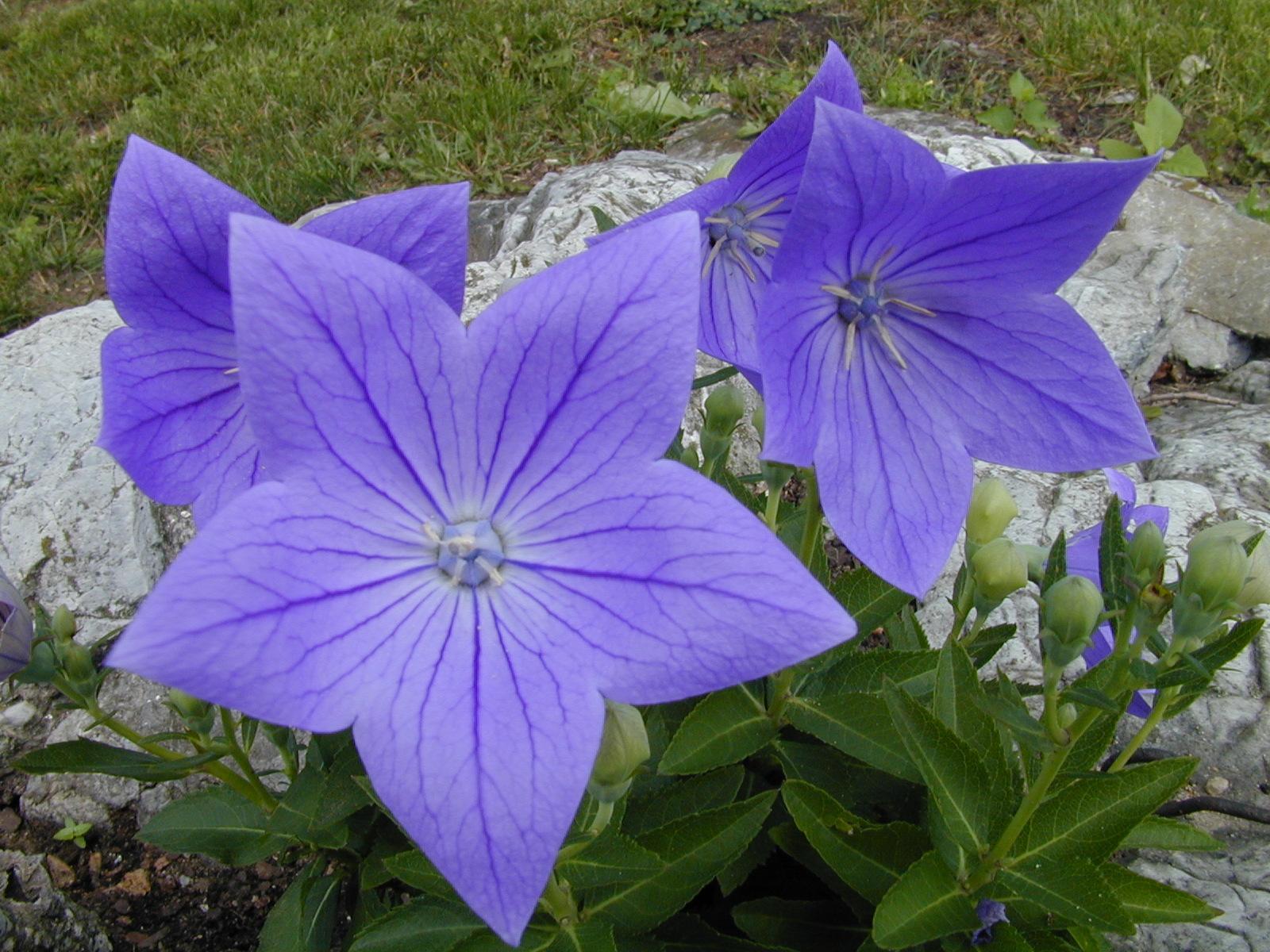 fleurs23.jpg