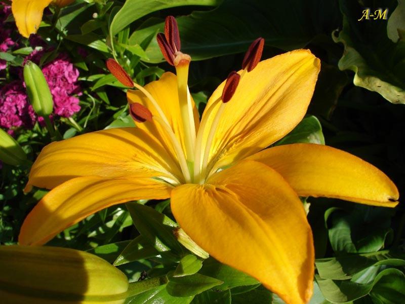 fleurs24.jpg