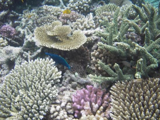 corail3.jpg
