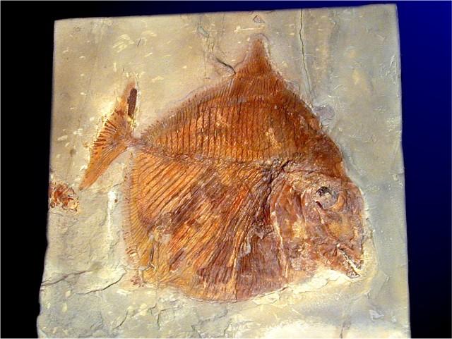 fossile3.jpg