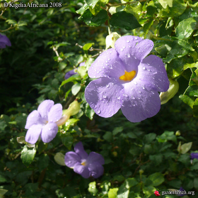 plante01.jpg