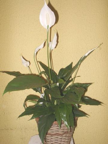 planteappatrement4.jpg