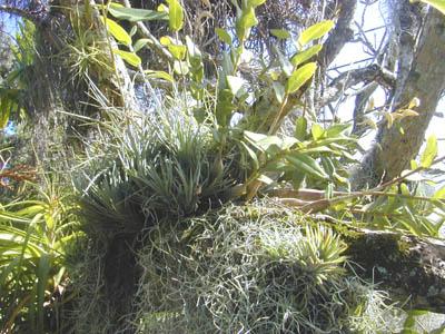 epiphytes3.jpg