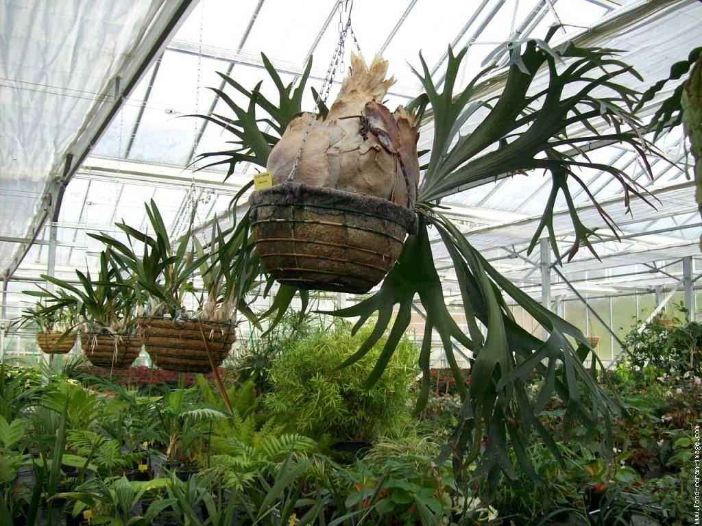 plantesuspendues.jpg