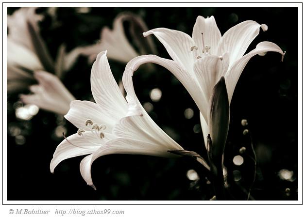 fleurs0.jpg
