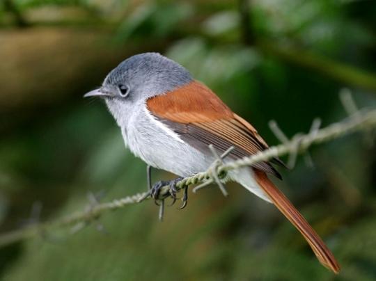oiseauvierge240295.jpg