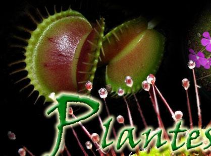 Plantes carnivores quebec images for Plante carnivore 01