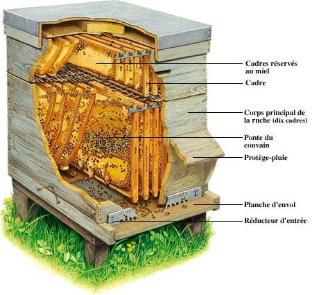 abeilleruche.jpg