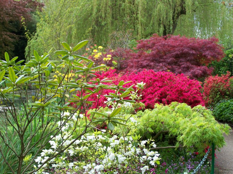 Sophie astuces tout en vert - Couvre sol jardin japonais ...