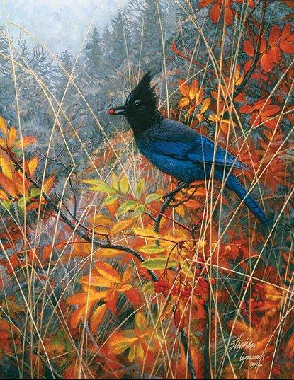 oiseau01.jpg
