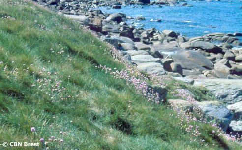 pelouseaerohaline.jpg