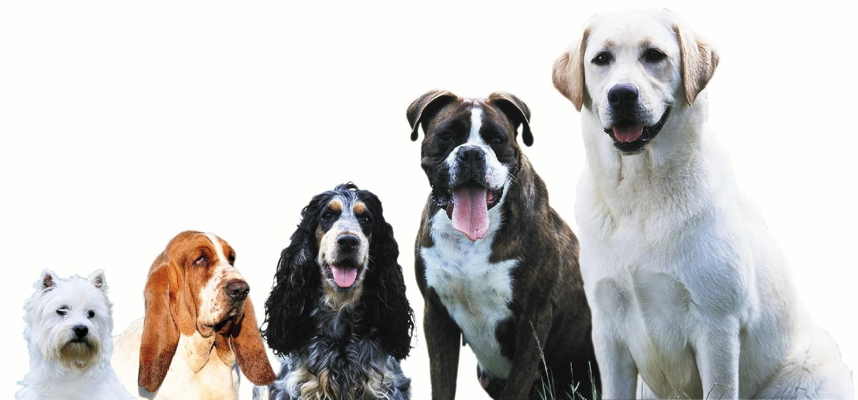 chiens5.jpg