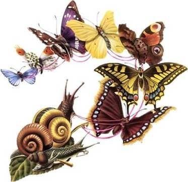 imagepapillonescargot.jpg